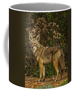 The Coyote Coffee Mug
