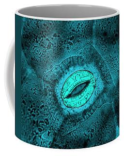 Tradescantia Sp. Stomata, Lm Coffee Mug