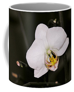 Coffee Mug featuring the photograph White Orchid by Sherman Perry