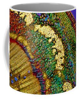 Apple Tree Stalk Tissues, Lm Coffee Mug