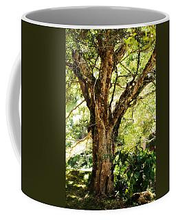 Kingdom Of The Trees. Peradeniya Botanical Garden. Sri Lanka Coffee Mug