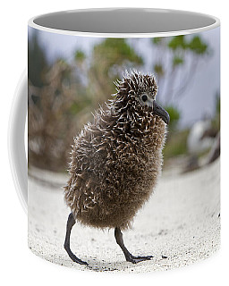 Laysan Albatross Chick Coffee Mug