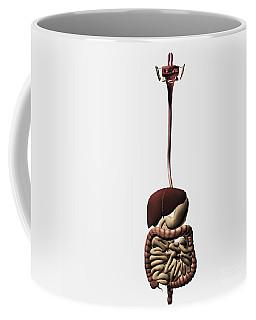Medical Illustration Of The Human Coffee Mug