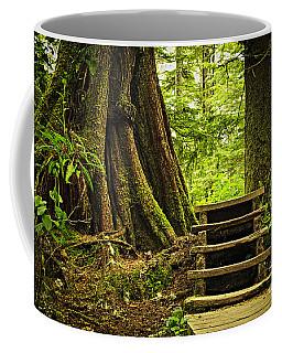 Path In Temperate Rainforest Coffee Mug