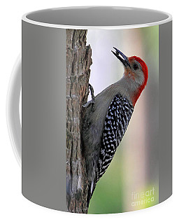 Coffee Mug featuring the photograph Red Bellied Woodpecker  by Meg Rousher