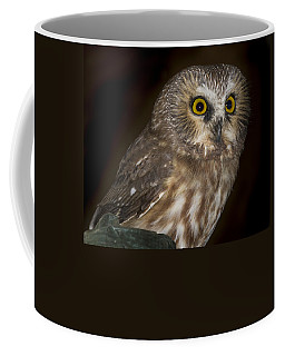 Saw-whet Coffee Mug