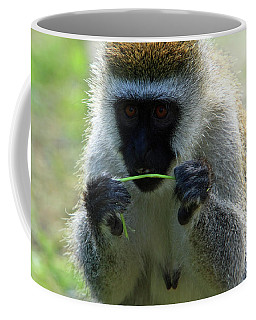 Vervet Monkey Coffee Mug