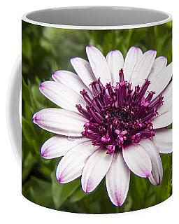 3d Berry White Cape Daisy - Osteospermum  Coffee Mug