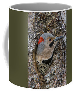 Northern Flicker In Nest Cavity Alaska Coffee Mug