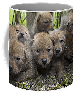 4 Week Old Wild Coyote Pups In Chicago Coffee Mug
