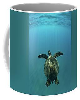Green Sea Turtle Swimming Coffee Mug