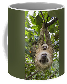 Coffee Mug featuring the photograph Hoffmanns Two-toed Sloth And Old Baby by Suzi Eszterhas