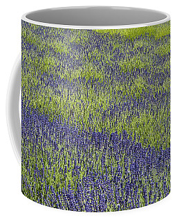 Lavendar Field Rows Of White And Purple Flowers Coffee Mug