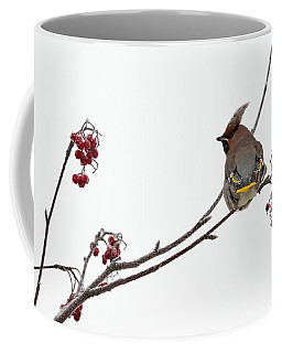 Bohemian Waxwings Eating Rowan Berries Coffee Mug by Jouko Lehto