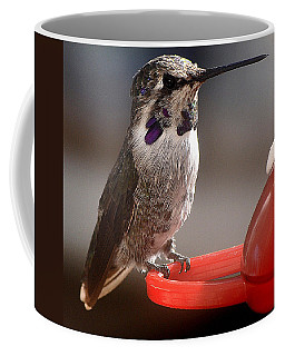 Coffee Mug featuring the photograph Female Anna's Sitting On Perch by Jay Milo
