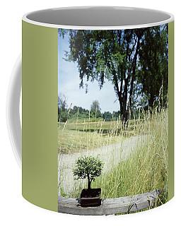 A Bonsai Tree In A Hayfield Coffee Mug