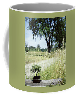 A Bonsai Tree In A Hayfield Coffee Mug