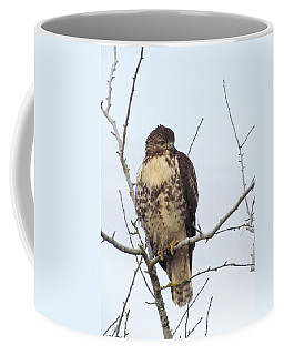 Coffee Mug featuring the photograph A Brrrrrr Day For Raptors  by I'ina Van Lawick