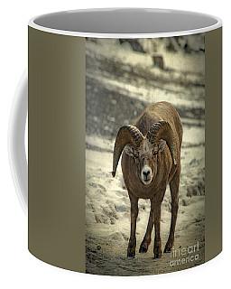 Rocky Mountain Bighorn Sheep Coffee Mugs
