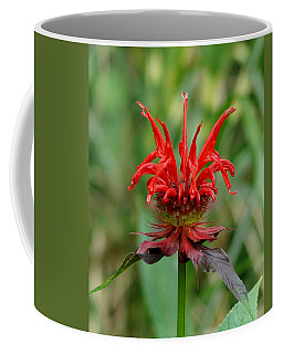 A Flowering Red Castle Beauty Coffee Mug