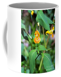 Coffee Mug featuring the photograph A Fragile Flower by Chalet Roome-Rigdon