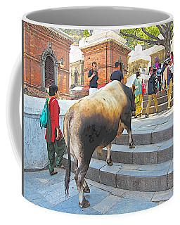 A Holy Cow Climbing Steps From Bagmati River In Kathmandu-nepal  Coffee Mug