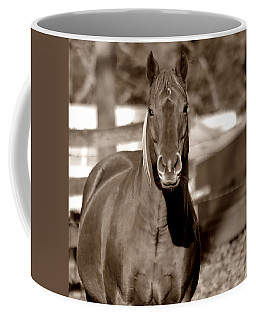 Coffee Mug featuring the photograph A Horse Is A Horse by Deena Stoddard