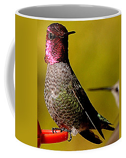 A Male Anna's Looking At A Female Anna's Coffee Mug