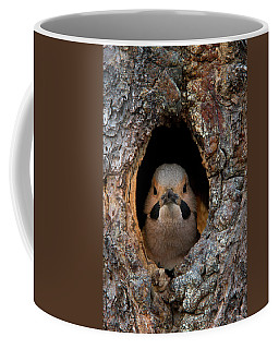 A Northern Flicker In The Hollow Coffee Mug