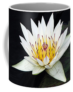 Coffee Mug featuring the photograph Botanical Beauty by Rick Locke