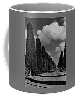 A Street Lined With Cypress Trees Coffee Mug
