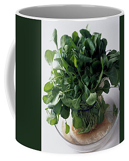 A Watercress Plant In A Bowl Of Water Coffee Mug
