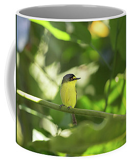 A Yellow-lored Tody Flycatcher Coffee Mug