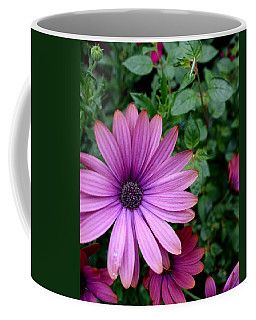 Coffee Mug featuring the photograph African Daisy by Betty-Anne McDonald