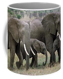African Elephant Females And Calves Coffee Mug