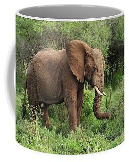 African Elephant Grazing Serengeti Coffee Mug
