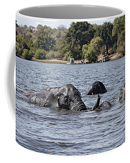 Coffee Mug featuring the photograph African Elephants Swimming In The Chobe River by Liz Leyden