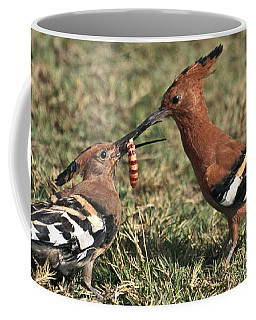 Coffee Mug featuring the photograph African Hoopoe Feeding Young by Liz Leyden