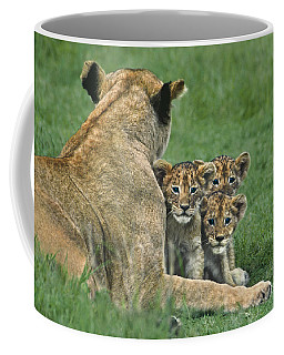 Coffee Mug featuring the photograph African Lion Cubs Study The Photographer Tanzania by Dave Welling