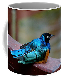 African Superb Starling Bird Rests On Wooden Beam Coffee Mug