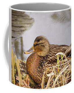 Coffee Mug featuring the photograph Afternoon Siesta by Jordan Blackstone