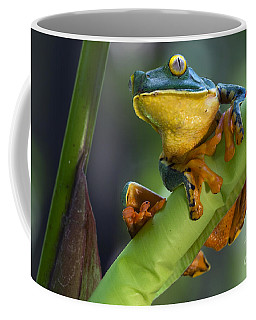 Agalychnis Calcarifer 4 Coffee Mug
