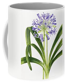 Agapanthus Coffee Mug