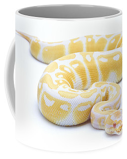 Albino Royal Python Coffee Mug