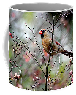 Alert - Northern Cardinal Coffee Mug