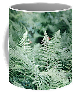 Coffee Mug featuring the photograph Algonquin Ferns by David Porteus