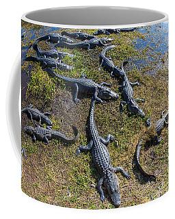 Alligators Along The Anhinga Trail Coffee Mug