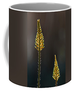 Coffee Mug featuring the photograph Aloe Plant by Tam Ryan