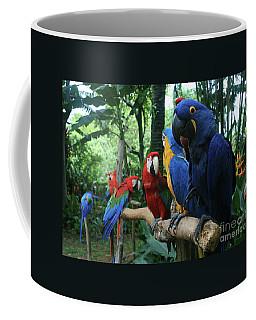 Aloha Kaua Aloha Mai No Aloha Aku Beautiful Macaw Coffee Mug