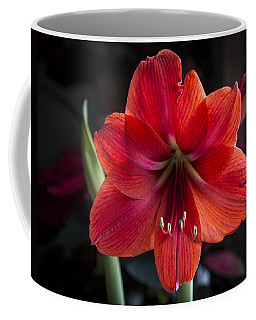 Amaryllis 2 Coffee Mug